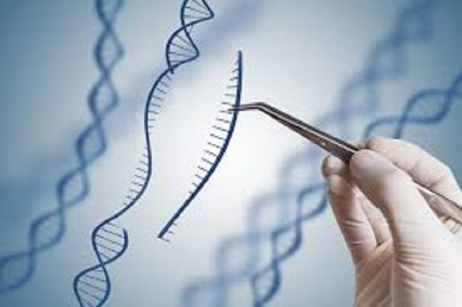 WHO Urges Global Framework on Human Genome Editing