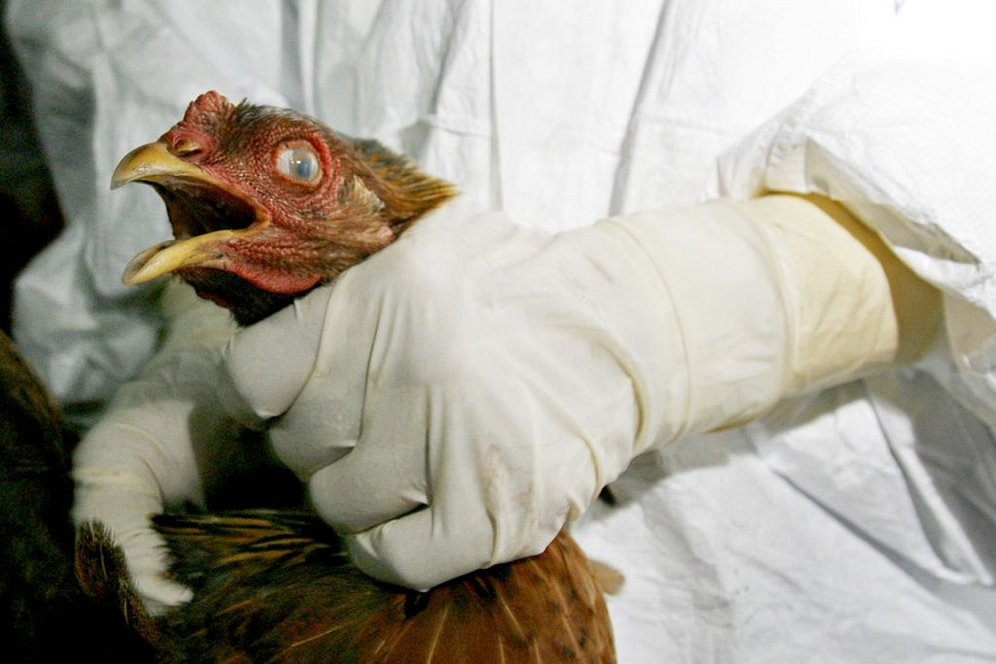 Nepal Witnesses First Bird Flu Death
