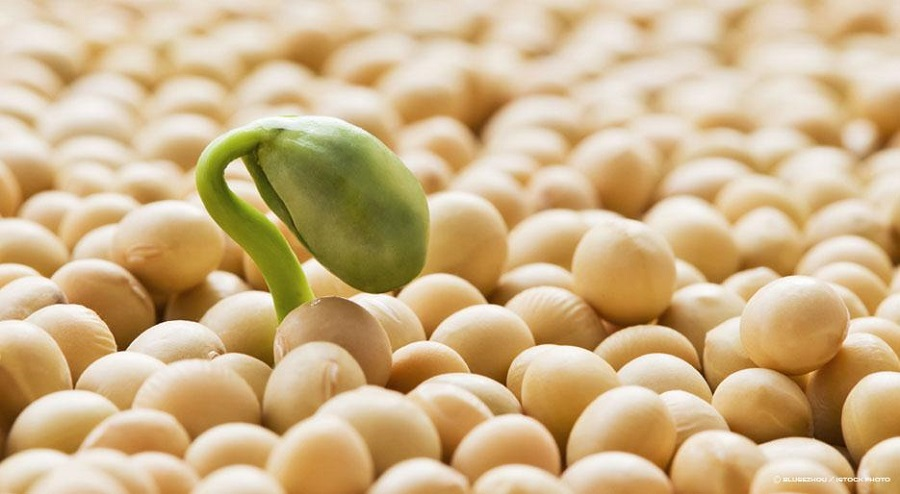 Soy Protein can Reduce bad Cholesterol