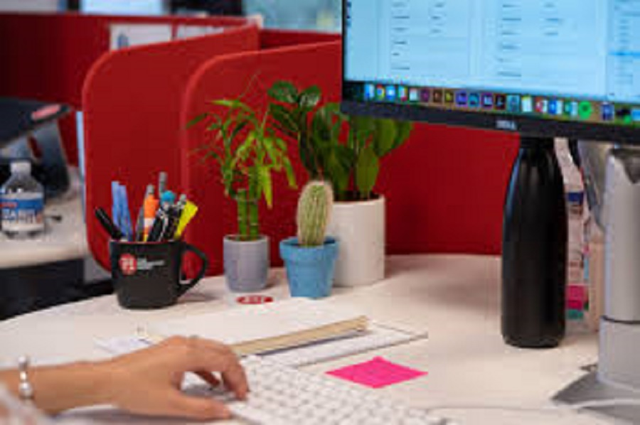 Desk Plants Can Reduce Stress at Work: Study
